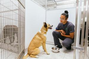 makana kennel_res