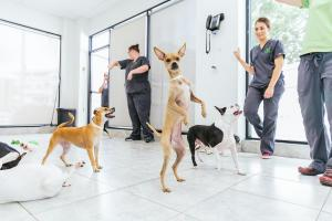 petcare group_res