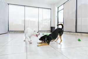 petcare play_res